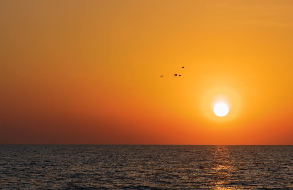Photo of sunset with birds over the sea by Moka on Unsplash